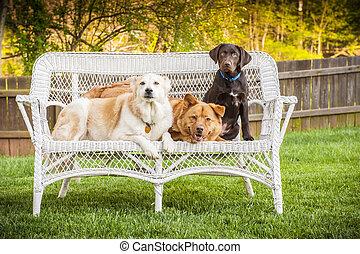 poser, chiens, chaise, extérieur, trois