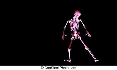 poser, squelette