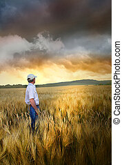 posição homem, em, um, campo, de, trigo