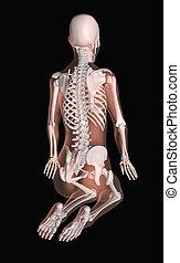 posição, ioga, esqueleto, femininas