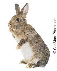 posición, conejo