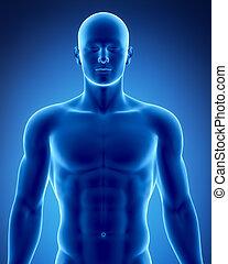 posición, figura masculina, anatómico