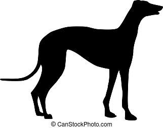 posición, galgo, silueta, perro