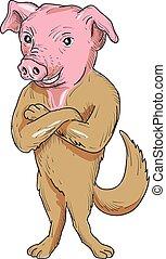 posición, perro, brazos, cerdo, cruzado, caricatura