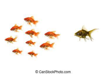 posición, pez, oro, multitud, afuera