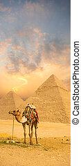 posición, pirámide, colorido, camello, egipto, ocaso, frente