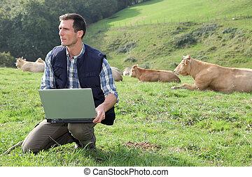 posiedzenie, laptop, pole, komputer, bydło, rozpłodnik