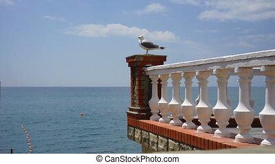 posiedzenie, wielki, waterfront., reling, biały, seagull