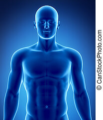 positie, mannetje, anatomisch