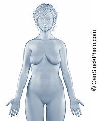 position, frau, freigestellt, anatomisch