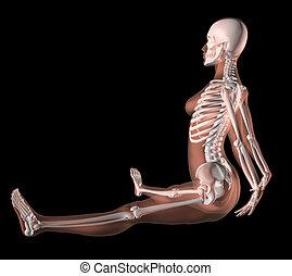 position, yoga, squelette, femme