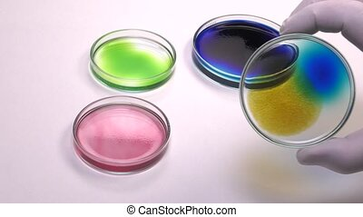 Positioning an spots petri dish - several petri dishes of...