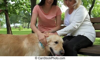 Positive family palming their dog outdoors - True emotions....