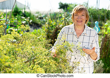 Positive mature woman picking dill in garden
