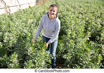 Positive woman checking seedlings of fava beans