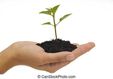 possession main, plant