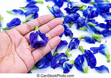 possession main, pois, fleurs