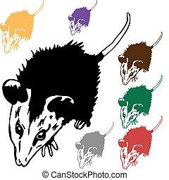 Possum - An image of a possum.