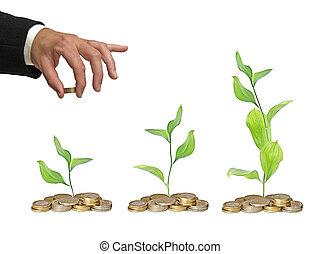 postęp, od, zieleń handlowa