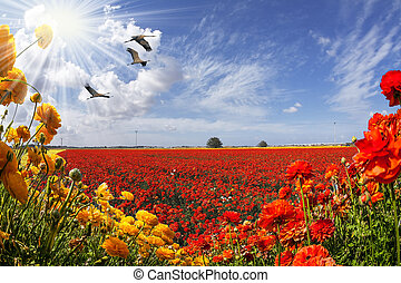 Post card. Red, yellow, pink, orange flowers swaying in the wind. Spring warm day. Farm field blooming large garden buttercups /ranunculus/. The concept of of artistic photography