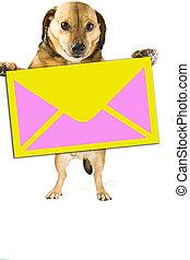 post dog