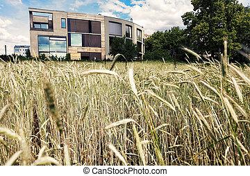 Post-Modern Architecture Behind Wheat Field