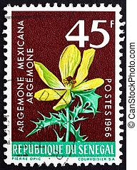 SENEGAL - CIRCA 1966: a stamp printed in Senegal shows Mexican Poppy, Argemone Mexicana, Flowering Plant, circa 1966