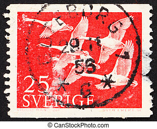 SWEDEN - CIRCA 1956: a stamp printed in the Sweden shows Whooper Swans, circa 1956
