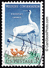 Postage stamp USA 1957 Whooping Crane, Bird - UNITED STATES...