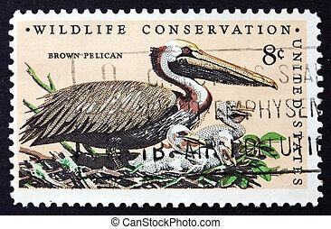 Postage stamp USA 1972 Brown Pelican, Bird - UNITED STATES...