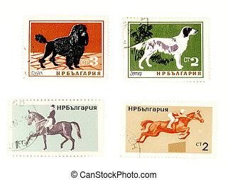 postaköltség, lovak, topog, öreg, kutyák