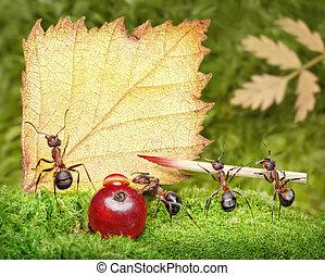 postal, equipo, blanco, hormigas, escritura