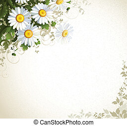 chamomile - postal with a realistic chamomile on the beige ...