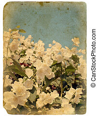 postcard., 花, 古い, 咲く, jasmine.