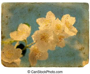 postcard., květ, dávný, kvetoucí, jasmine.