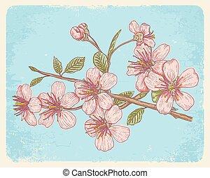 Postcard with sakura