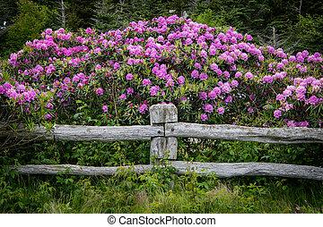 poste, rhododendron, sur, barrière, fleurs