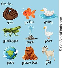 Poster letter g and many words illustration