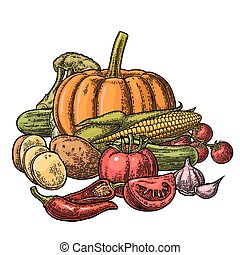 Poster with set vegetables. Cucumbers, Garlic, Corn, Pepper, Broccoli, Potato and Tomato.