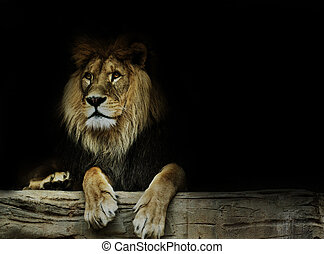 postkaart, leeuw