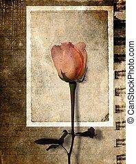 postkaart, roos, grunge