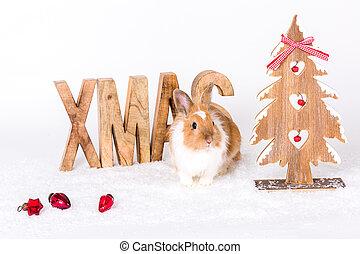 postkarte, weihnachten, kaninchen