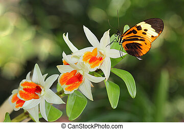 Postman Butterfly and Orchid
