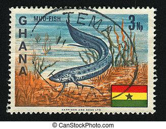 GHANA - CIRCA 1966: African Lungfish, circa 1966.