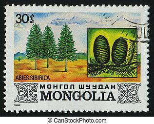 postmark - MONGOLIA - CIRCA 1982: Abies sibirica. Tree,...