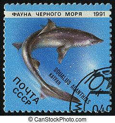 RUSSIA - CIRCA 1991: stamp printed by Russia, shows Marine Life, Squalus acanthias, circa 1991.