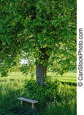 posto, riposare, legno, piccolo albero, sotto, panca