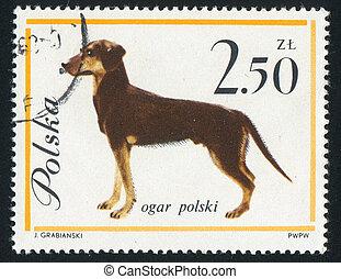 poststamp dog