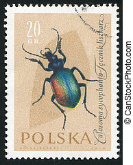 poststamp insect