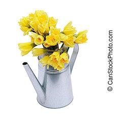 Posy In Watering Can - Yellow daffodils in metal watering...